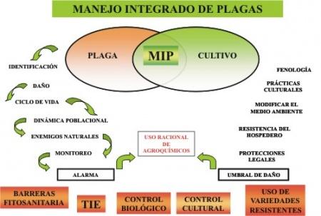 Etapas del manejo integrado de plagas MIP