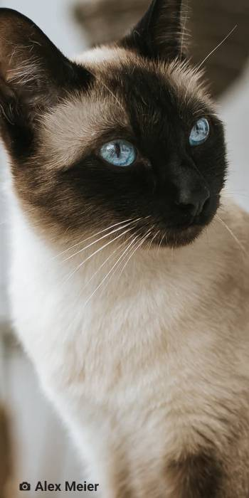 stelo queiroga poesia cordel gato siames lazaro e joao ambiente de leitura carlos romero cafe