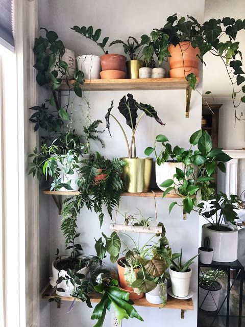 indoor plant wall for small spaces