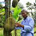 Vườn sầu riêng hạt lép của lão nông U80 Quảng Ngãi