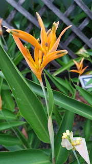 Orange flowers collection, orange flowers, orange garden, orange theme flowers, orange bouquet, garden