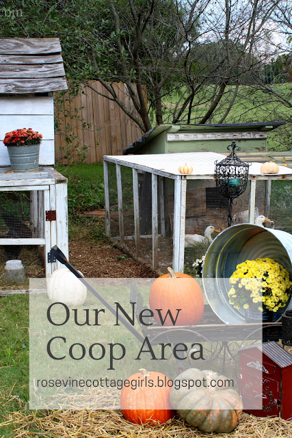 Backyard Chickens, Backyard Ducks, Hobby Farm, Coops, Fall Decor