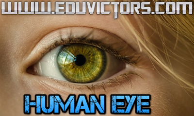 CBSE Class 10 / class 8 -  Science - About Human Eye (#cbseNotes)