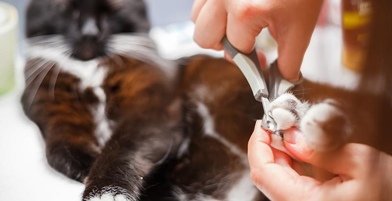 Comment soigner les griffes de son chat ?