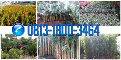 Jual tanaman hias di Jakarta timur