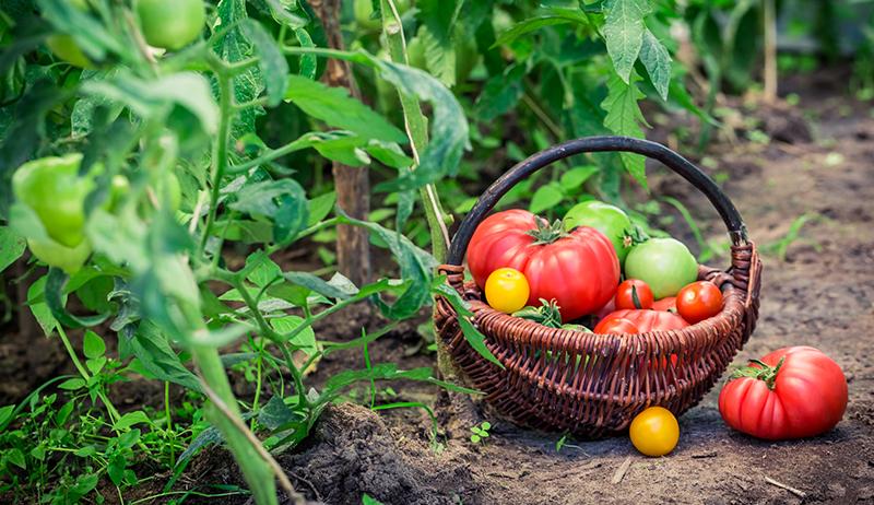 cara menjaga kesuburan tanah
