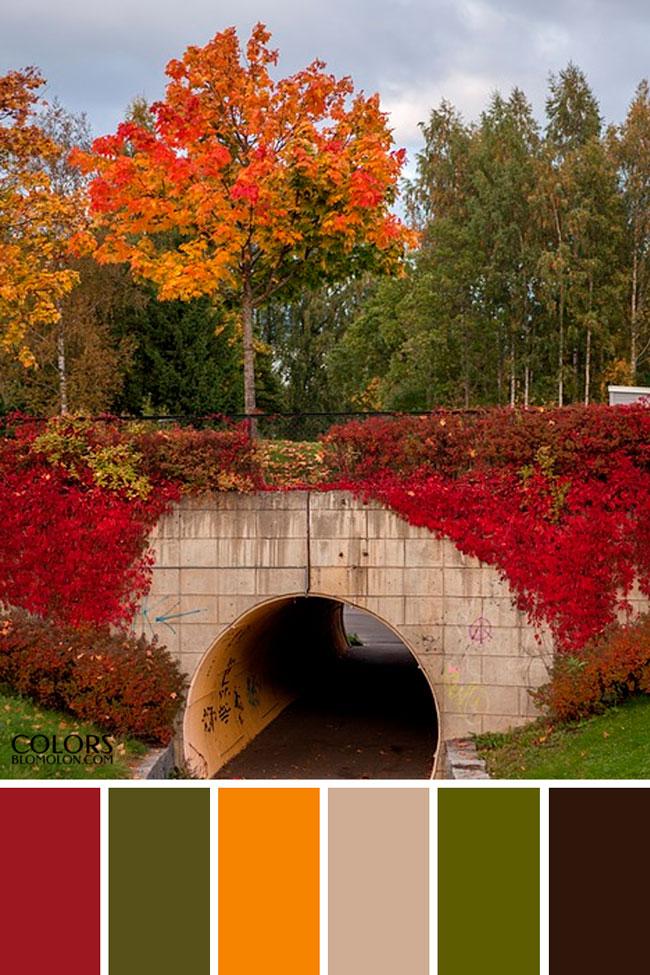 plantilla_base_paletas_de_colores_3