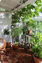 Lilla Blanka Xthus Vintage Greenhouse