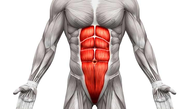 SAMARPAN PHYSIOTHERAPY FITNESS & REHAB. CLINIC: Rectus Abdominis ...