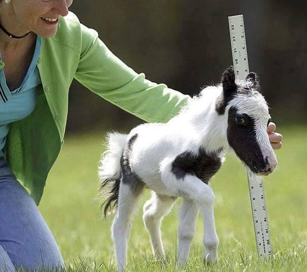 lindos%2Banimais%2Bbebe%2B%2B%252818%2529 - Os filhotes de animais mais lindinhos que você já viu!