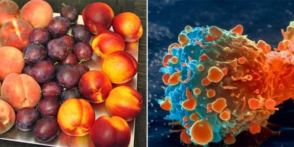 Peaches and Plums Kill Cancer