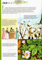 que es el algodon-enciclopedia visual