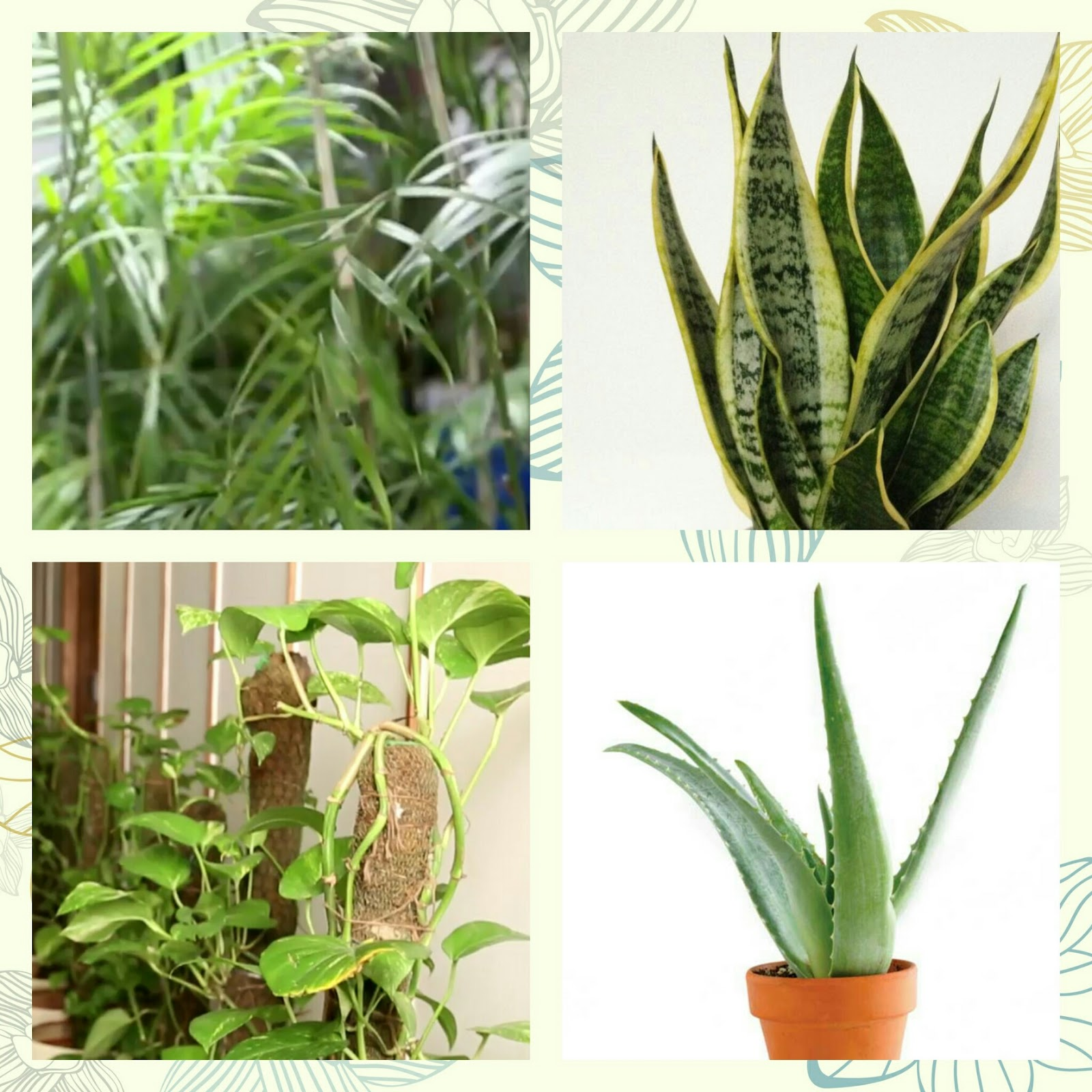 Indoor plants for oxygen indoor plants for oxygen urban for Oxygen plant