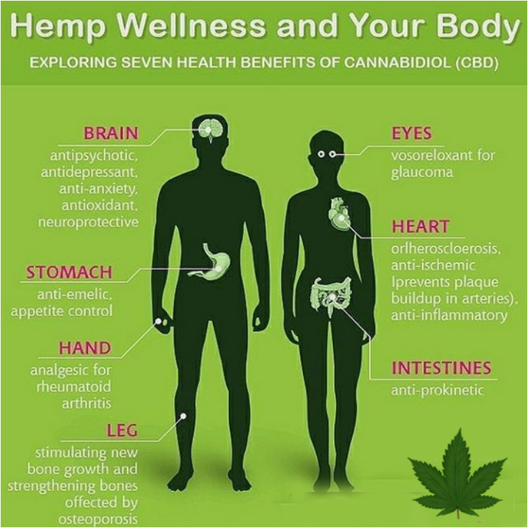 CBD (hemp oil) legalization. How CBD helps human beings and there overall body. CBD brain, Heart, Stomach/gut, pain in hands and legs.