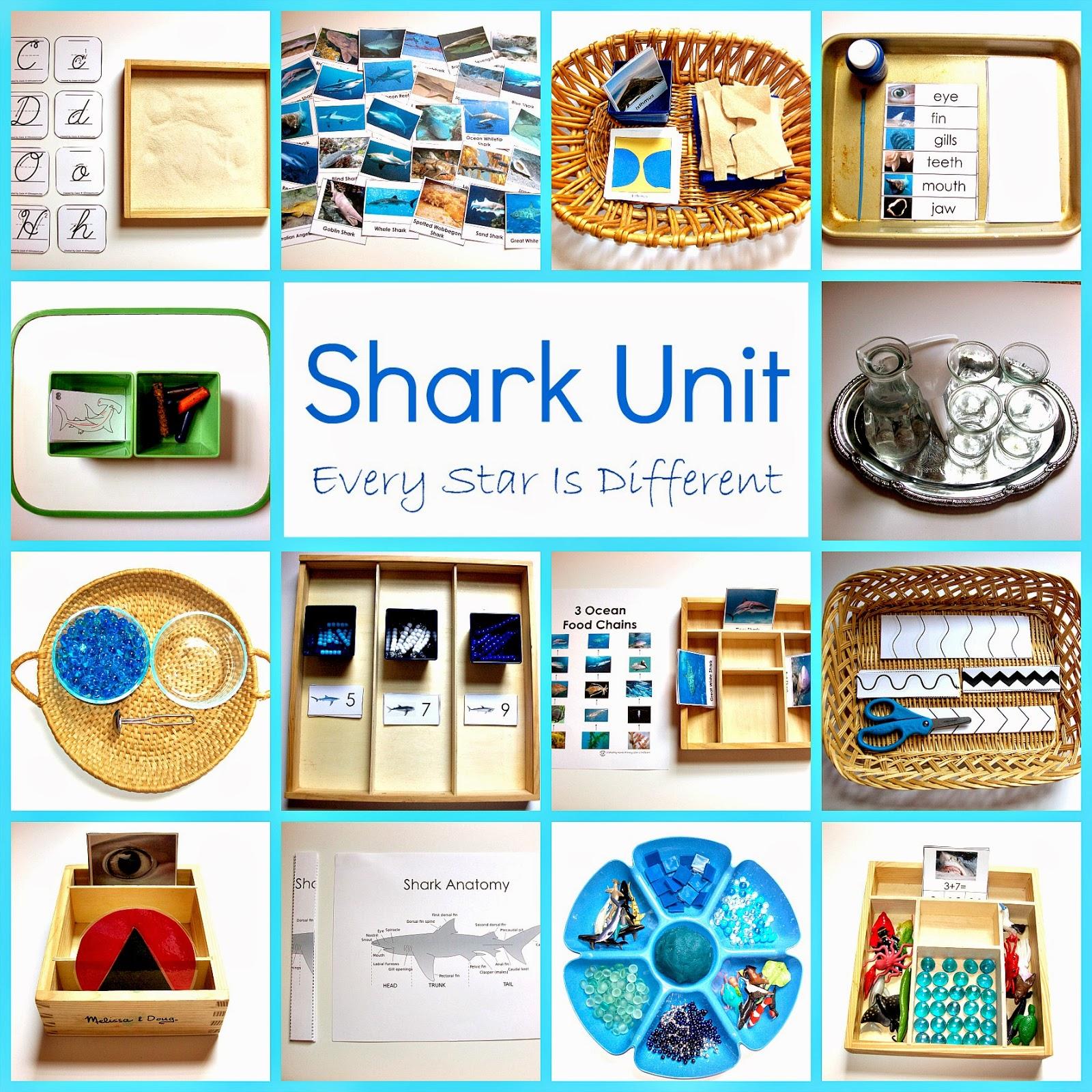 Shark Unit 1