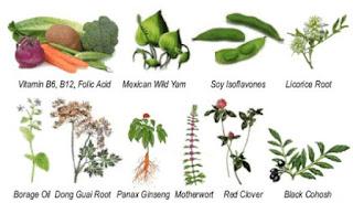 Macam-Macam Penyakit Kelamin Dan Pengobatannya Dengan Herbal Alami