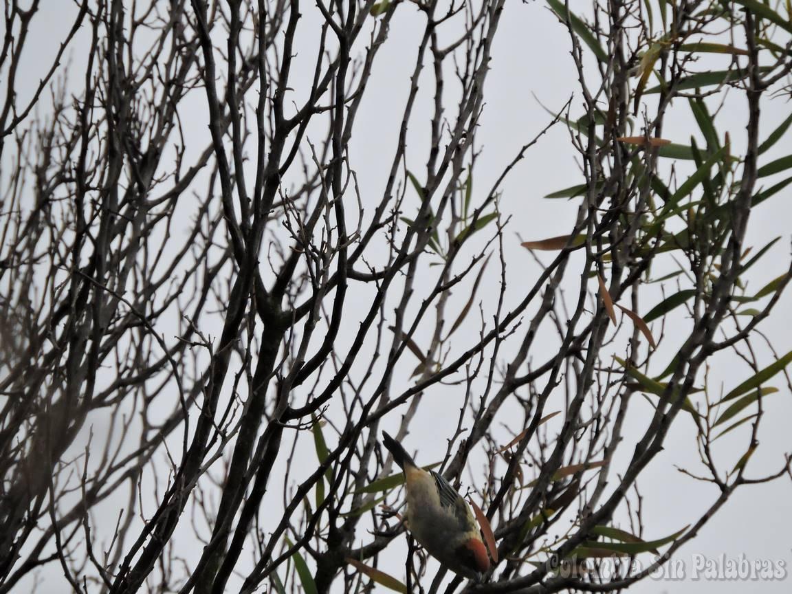 pájaro volando desde árbol