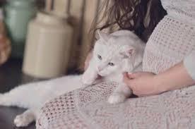 كيف تجنبي جنينك الإصابة بداء القطط
