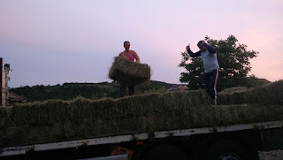 A and the Other Brother unloading the hay bales