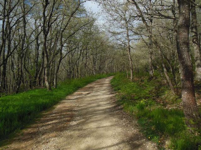 Montes de Oca, Camino, Jola Stepien