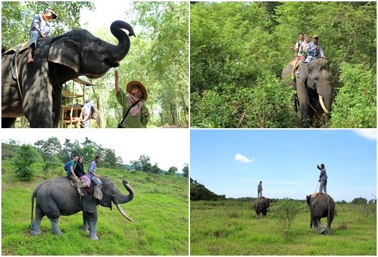 paket-tour-gajah-way-kambas-ERU-elora-tour-adventure