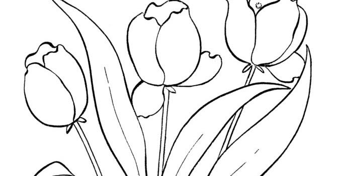 Раскраски деткам: раскраска весенние цветы - тюльпаны