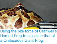 http://sciencythoughts.blogspot.co.uk/2017/09/using-bite-force-of-cranwells-horned.html
