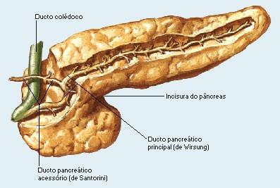 Câncer de Pâncreas novo medicamento