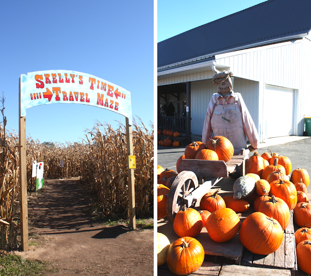Can you solve a corn maze? Harvest fun at Skelly's Farm Market!