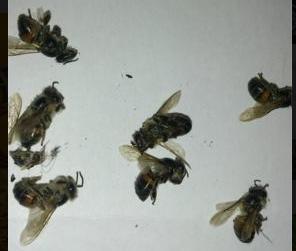 Έκκληση προς τους παλιούς μελισσοκόμους από την Κρήτη: Οι μέλισσες στην φωτογραφία υπάρχει περίπτωση να είναι Adami?