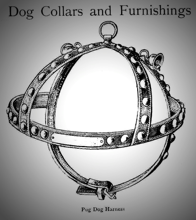 1861 dog harness for a pug