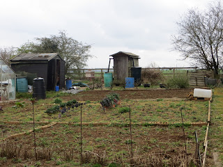 weeds and brassicas