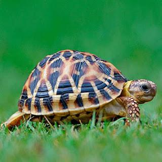 صور صور حيوانات اليفة 2019 خلفيات حيوانات جميلة 2.jpg