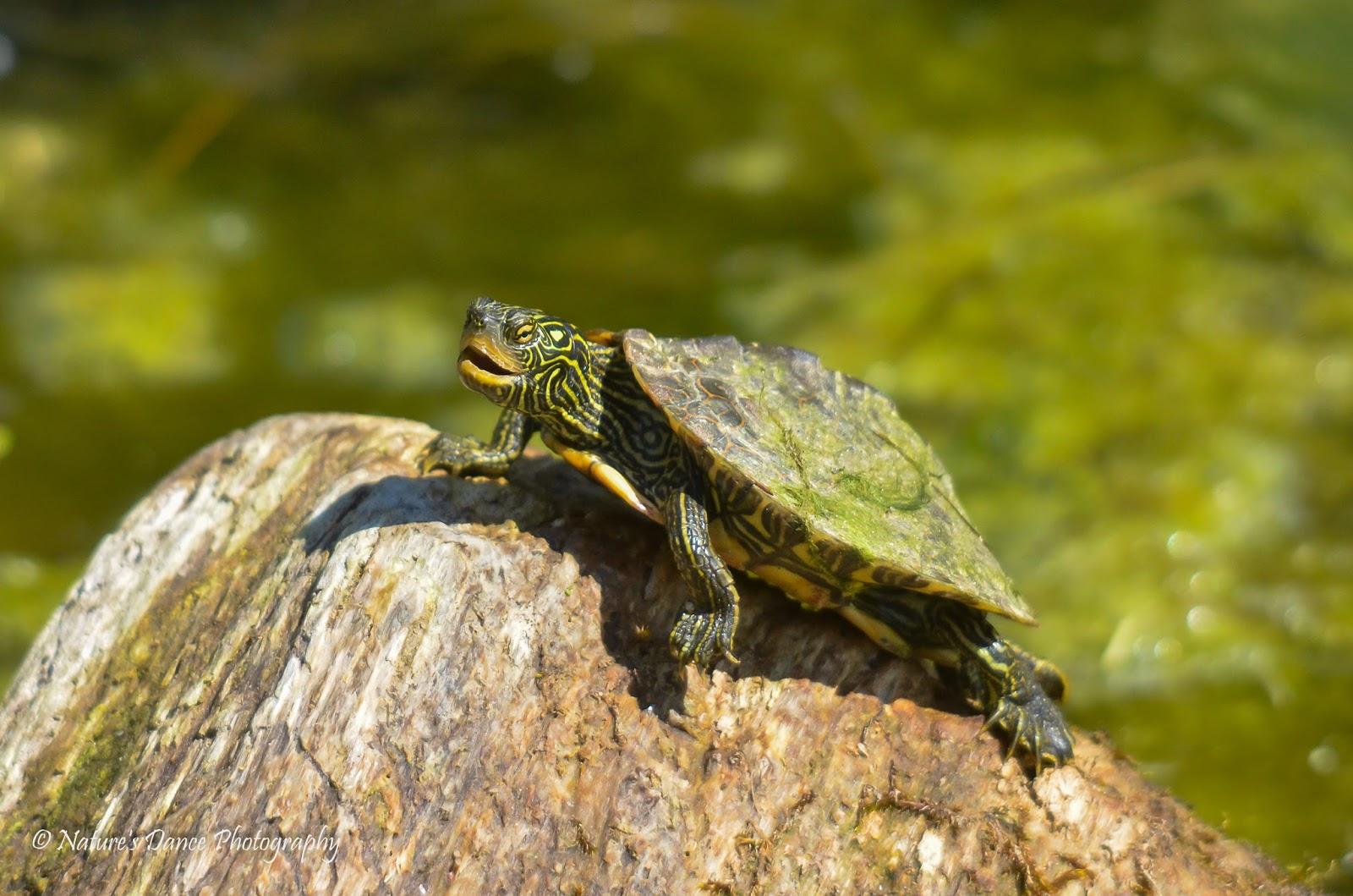 A 2 Z Reptiles Friends of Sam Smith P...
