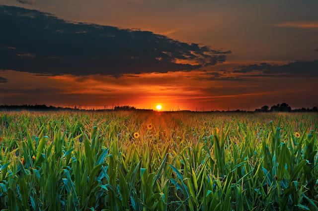 Saham Sub Sektor Pertanian (Crops)