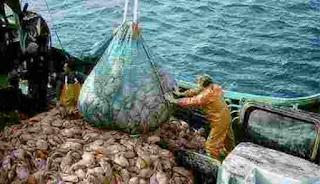 5 أسماء مغربية تستفيد من الصيد البحري وتجني 3 مليار دولار سنويا وتسطو بغير موجب حق على ثروات الشعب المغربي