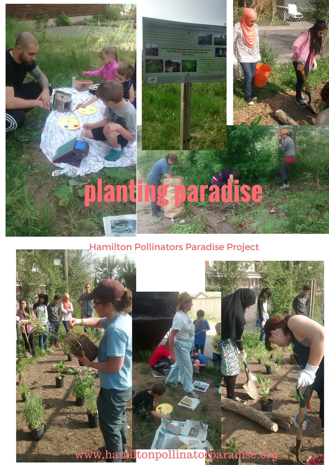pollinators paradise project 2016