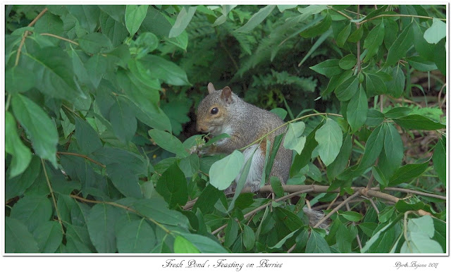 Fresh Pond: Feasting on Berries