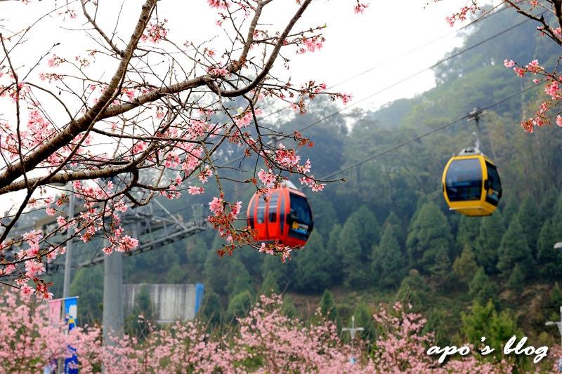 日月潭櫻花纜車