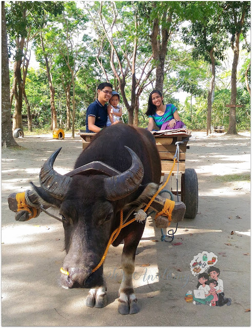 Chocnut the Carabao at The Fun Farm at Sta. Elena
