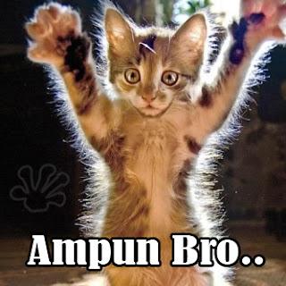 gambar lucu kucing