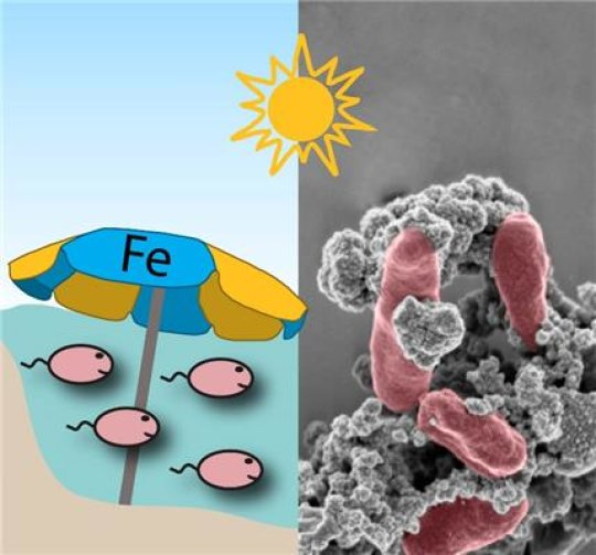 Earth's first bacteria made their own sunscreen