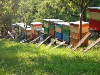 APICULTURA EN RUMANIA - BEEKEEPING IN ROMANIA