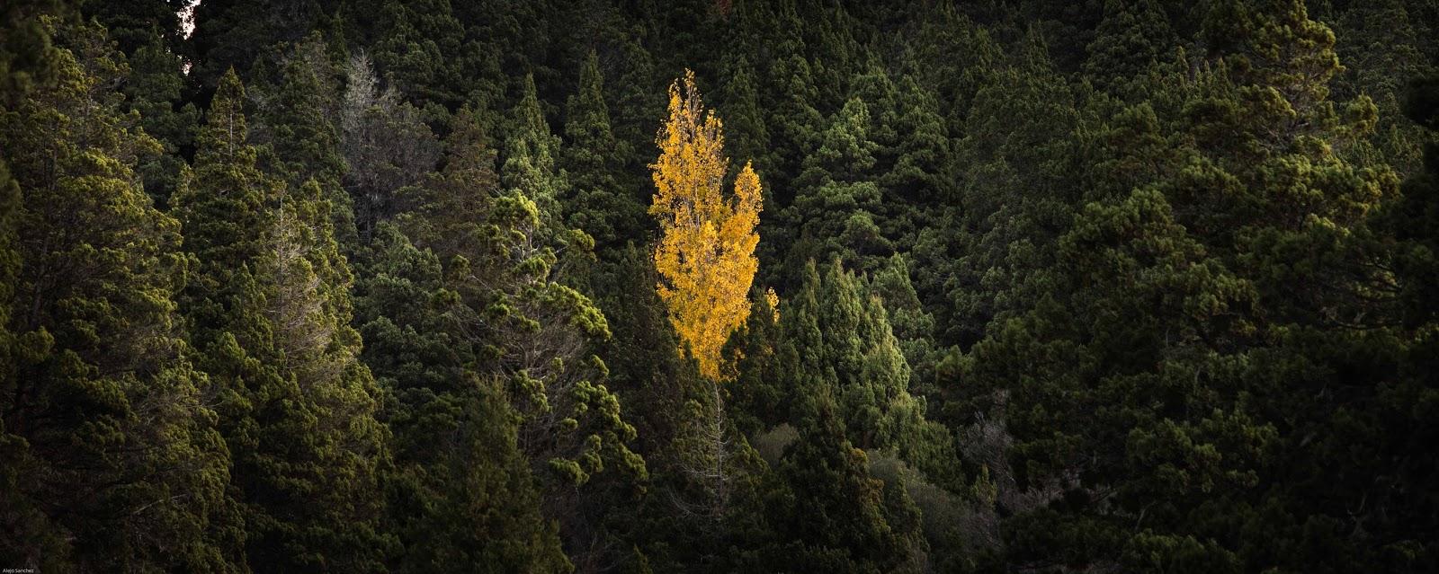 Patagonia Norte Safari Fotográfico y workshop por Alejo Sánchez, bosques patagónicos, photo travel, otoño, autumn, Parque Nacional Lanín, Patagonia Argentina