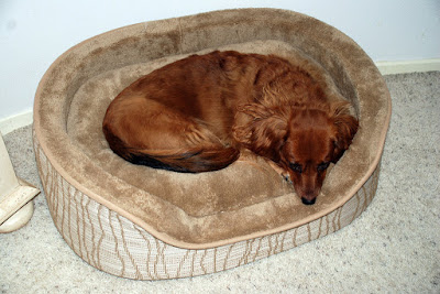 Cooling Pet Beds, Therapeutic Solutions For Those Hot Summer Months