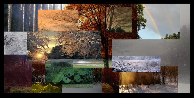 A collage of photos taken of the same scene of a tree in front of a field.