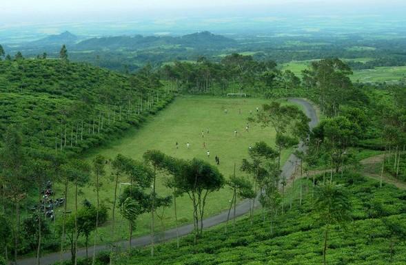 Gambar Kebun Teh Jamus Ngawi Pesona Keindahan Wisata Kebun Teh Jamus Ngawi Ihategreenjello