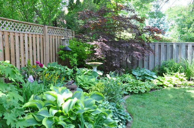 Three Dogs in a Garden: A Shade Garden in Oakville, Ontario