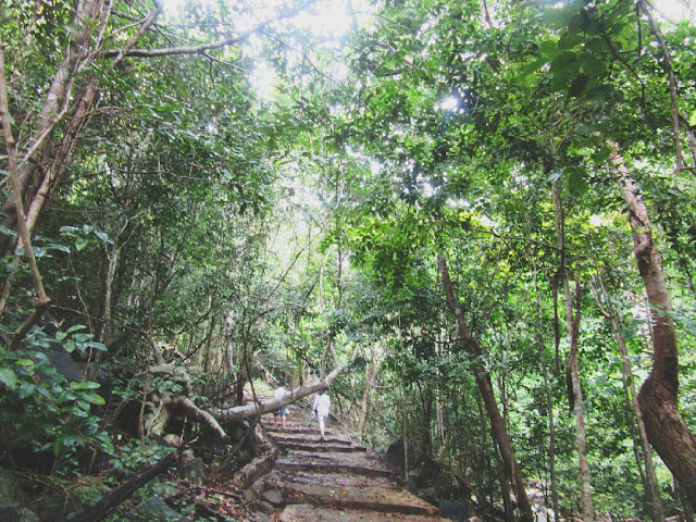 Rừng Nguyên sinh Côn Đảo