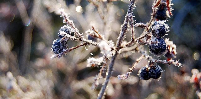 frozen, nature